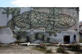 """""""Moorish Gecko"""", em Caldas da Rainha (Crédito: Hélder Gorjão)"""