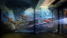 """""""Swimming with the Sharks"""", em Caldas Fev2014 (Crédito: Violant)"""