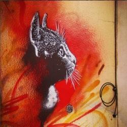 """Uma das pintura do artista francês """"C215"""" em Lisboa (Crédito: CtrlAltRUA)"""